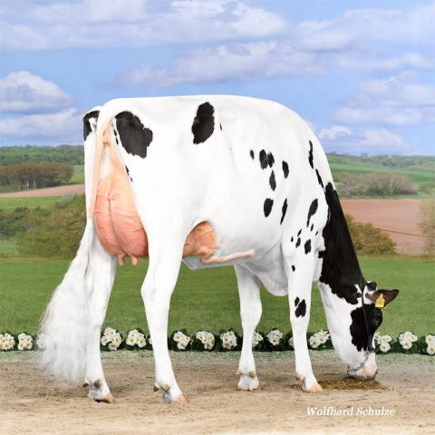 Daughter: Ina P VG-85