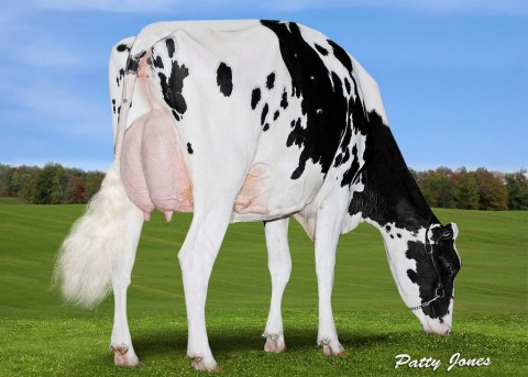 Dam: Lima Biscuit Doorman VG-88