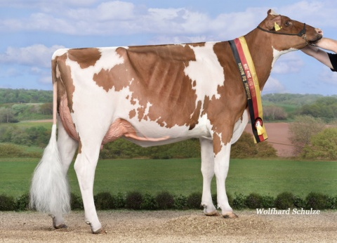Dam: Special-RED VG-87 Cow of the year 2019